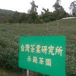 許怡先談生普:從履歷認證看台灣茶未來