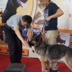「搜救犬為大家服務」柯文哲:要照顧牠們的後半輩子