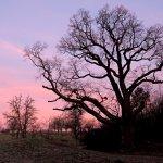 一棵珍貴西班牙橡木的足跡 是一場百年的浪漫旅程