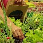 產地直送蔬菜還不夠新鮮?這家超市把菜園搬進賣場裡讓你自己動手摘!