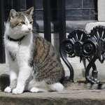 英國首相換人做》首相官邸「捕鼠長」、英國「第一貓」賴瑞穩如泰山
