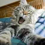 維他命B群真能提神嗎?別被藥品廣告騙了,用法不對,吃再多還是想睡!