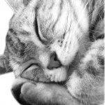 名作家談貓》角田光代:貓咪可不臭