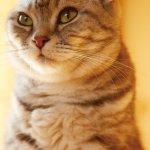 名作家談貓》角田光代:貓咪不是毛孩子