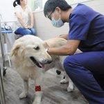 整合全國獸醫力推絕育 農委會擴大流浪犬控制能量