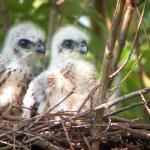 誘食保育類禽鳥觸法!可開罰10萬以上