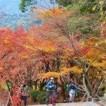 10個旅遊小撇步,景點交通美食全都包,福岡趴趴走一次就上手!