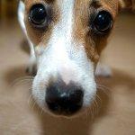 人類口中的美食,對寵物卻是致命毒物。這11種食物千萬別給寵物吃!