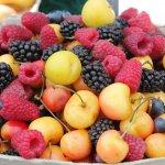 癌症病人不可亂補?但其實這些營養品都對病程有益!