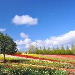 你見過粉紅山丘嗎?每個季節都有獨特花海,一睹廣島彩花盛開的絕美場景