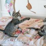 養貓的人朋友比較少!BBC列4個科學小知識,你知道最長壽的動物是什麼嗎?