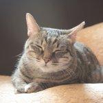 貓咪真能聽懂人類的話嗎?日本貓醫生:牠們靠這一招打天下!