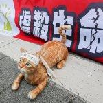 台版陳皓揚!嘉義男大生虐死3貓 判刑11月