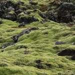 是什麼使地球擁有足夠的氧氣,讓萬物興起?科學家找到答案了