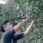 「台灣有最好的油」年輕世代發起苦茶油復興之路