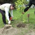 觀點投書:最好的城市建設就是植樹