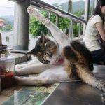 別再去猴硐看貓啦!當遊客一窩蜂看貓咪時,還有更重要的事被遺忘了…