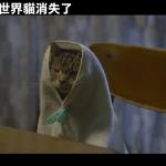 《如果這世界貓消失了》作家:貓只是包裝,實際上是媽寶男和中二女的故事