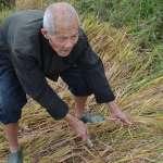 杜導斌專欄:大陸農民還是赤貧