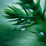 何謂自然?讀讀6則莊子寓言,讓你的心找回自由吧!