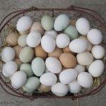 皮蛋、鹹蛋含鉛又重鹹,真有那麼恐怖嗎?破解加工蛋10大迷思!