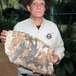非洲馬達加斯加發現疑似馬航MH370客機殘片