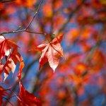現在就是最美的時候!盤點北海道8個賞楓地,一覽湖水倒映紅葉的秋日絕佳景致