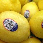 「9」是有機通常貴一點!看懂進口水果身上貼的數字標籤,讓人買了更安心