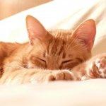 睡前運動再來杯熱牛奶,真能讓你一夜好眠嗎?心理權威這樣說