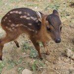 避免移送法辦 農委會修法 原住民族獵保育類動物最重罰10萬