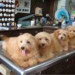流浪動物零安樂死》台南幫狗狗「找工作」 新北設據點與居民共處