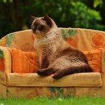 讀者投書:怎樣讓你的沙發衝浪之旅安全成行?看這個就對了!