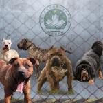 謝宜斌觀點:防範未然,危險寵物應提高飼主看管義務