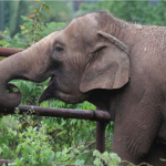 2016動物保護成果令人吃驚》長頸鹿、大象、犀牛、斑馬,這些人類熟悉的物種恐怕永遠消失