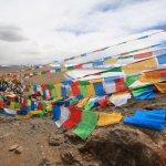 西藏真的是人間天堂嗎?從這片「牛比人多」的荒野中,看見美景背後最殘酷真相