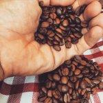 咖啡絕跡的日子就在眼前?專家預測,2050年地球上將有一半咖啡產地會消失