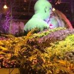 蘇煥智觀點:國際蘭展遷離蘭花園區的後果將如何?