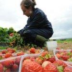 脫歐造成農場勞力短缺怎麼辦?英國學者:無人駕駛車輛可以取而代之