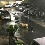 暗夜街頭縱犬殺貓,北市恐已有千貓受害