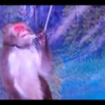 保育類動物遭逼雜耍10年,動保團體轟林務局瀆職