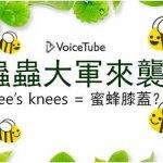 bee's knees是什麼?從蜜蜂、蝴蝶、蒼蠅、螞蟻…衍生出的10個昆蟲片語