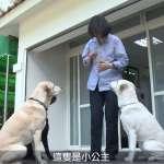 小英官邸大揭密,第一愛犬當導遊 蔡想想、蔡阿才不見蹤影