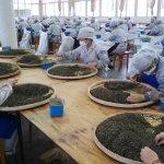 許怡先談生普:認證茶即將在芳村茶葉市場掀起產業新秩序