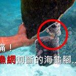 每天用一根吸管,50年後海洋會變怎樣?看這隻斷掌海龜,就知道人類有多自私…