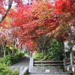 想賞楓不必大老遠跑日本!全台10處最美楓紅景點,最近的離台北市區只要40分