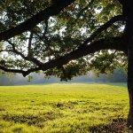 為什麼樹木是向上生長?這些植物學家這樣一步步揭開大自然神秘面紗…