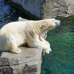 你以為氣候變遷只會影響北極熊嗎?人類的自私連植物也可能成為受害者啊…