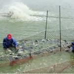 杜宇觀點:新農業上大菜,漁業呢?