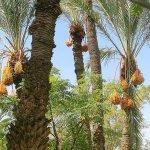 瑞典來鴻》 椰棗樹下看摩洛哥政治 ─ 伊斯蘭與民主之一瞥