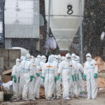 禽流感來了!南韓發布疫情最高警戒 全力遏阻H5N6病毒蔓延